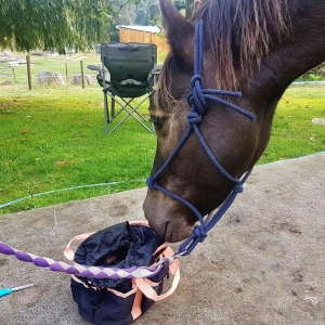 Thank you Anita for sending the photo of your gorgeous boy with his Black Caviar Grooming Bag
