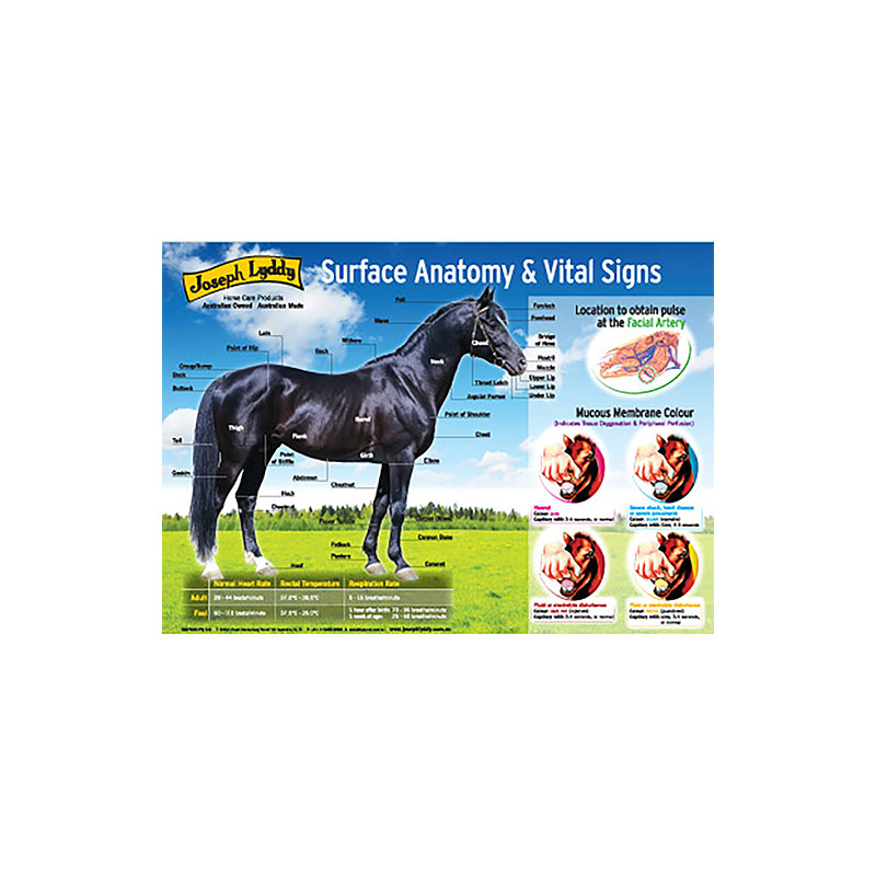 Waproo Product Surface Anatomy & Vital Signs Poster